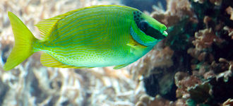 Unknown Tropical Fish