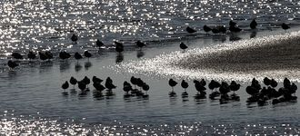 Waders At Leighton Moss (Silhouette)