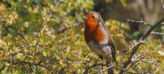 Robin At Testwood Lakes