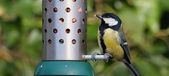 Great Tit On Peanut Feeder At Leighton Moss