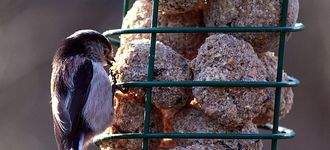 Long-Tailed Tit On Suet Feeder At Fairburn Ings